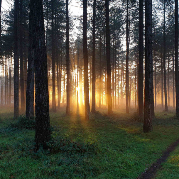 The Woodland Trust has published its Emergency Tree Plan which sets out how the UK can rapidly increase tree cover to help reach net zero carbon emissions